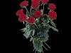 Langstilka røde roser