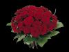 Røde roser tett i tett med grønt