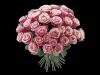 Rosalilla roser tett i tett med grønt